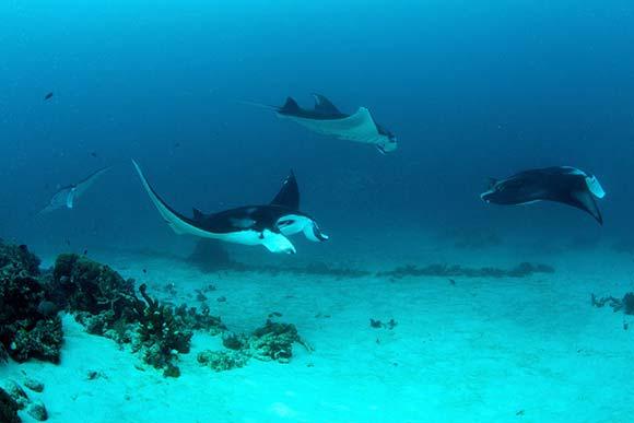 Submarinismo en Raja Ampat