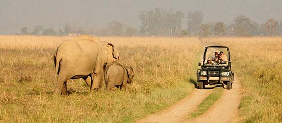 Los mejores parques nacionales de la India: Parque Nacional de Jim Corbett
