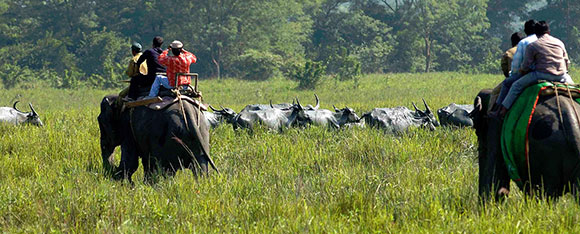 Los mejores parques nacionales de la India: Parque Nacional de Kaziranga