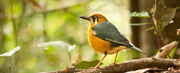 Los mejores parques nacionales de la India: Parque Nacional de Periyar