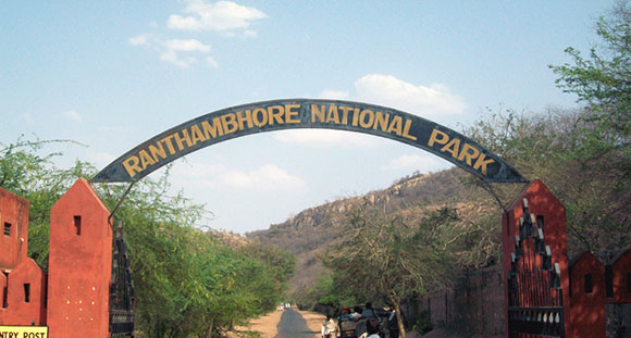 Los mejores parques nacionales de la India: Parque Nacional Ranthambore