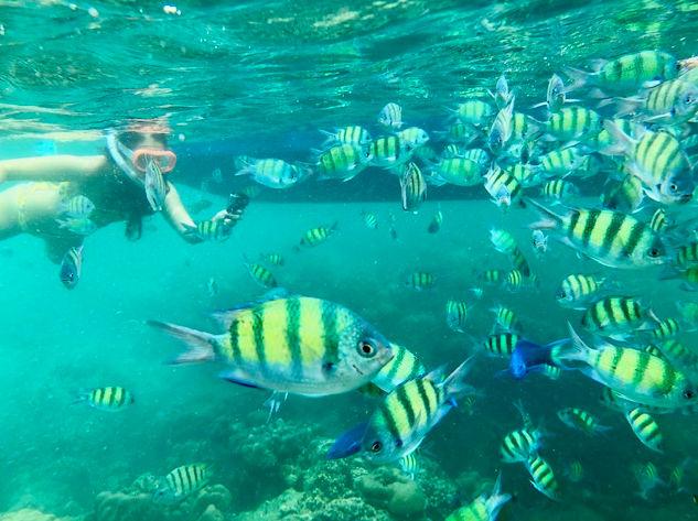 Snorkel en las islas Phi Phi